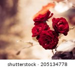Stock photo red garden roses at abstract background 205134778