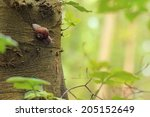 Helix Pomatia  Common Names The ...
