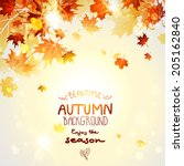 beautiful autumn background... | Shutterstock .eps vector #205162840