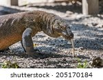 Постер, плакат: Komodo Dragon The Komodo dragon