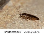 a cockroach on ground | Shutterstock . vector #205192378
