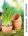 green grass in flowerpots and... | Shutterstock . vector #205196644