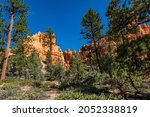 Hiking Through The Bryce Canyon ...