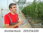 Farmer in a Greenhouse, calculated production of tomatoes - stock photo