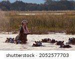 Mana Pools Mammals and wildlife