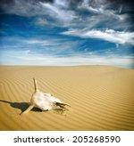 Desert Skull  Africa