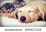 Stock photo puppy and kittens sleeping 205417123