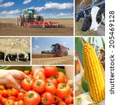 agriculture   collage  food... | Shutterstock . vector #205469128