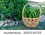 A Small Rattan Basket Filled...