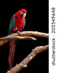 Scarlet Macaw. Colorful Parrot...