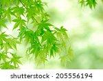 an image of verdure | Shutterstock . vector #205556194