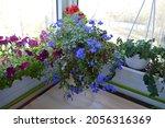 beautiful small garden with... | Shutterstock . vector #2056316369
