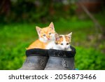 Small photo of Two ginger kittens sitting in old black galoshes, close up, copy space