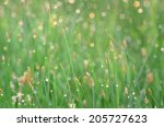 macro of green grass with... | Shutterstock . vector #205727623