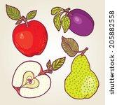 vector set of fresh fruits. | Shutterstock .eps vector #205882558