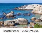 The Cape Cormorant Or Cape Shag ...