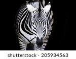 Black And White Zebra Looked...