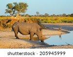 A White Rhinoceros ...