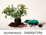 Rose Plant And Gardening Tools...