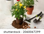 Rose Plants And Gardening Tools ...