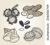 hand drawn illustration set of ... | Shutterstock .eps vector #206006749