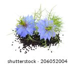 Nigella Sativa Or Fennel Flowe...