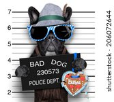 mugshot bavarian dog with a... | Shutterstock . vector #206072644