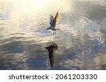 0ne Seagull Flying Very Close...