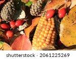 Autumn Leaves  Rosehip  Cones...