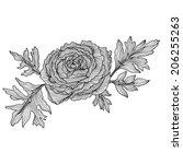 elegant decorative ranunculus...   Shutterstock .eps vector #206255263