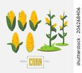 corns and corn tree   vector... | Shutterstock .eps vector #206268406