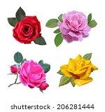 the set of beautiful roses....