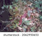 dark autumn foliage background...   Shutterstock .eps vector #2062950653