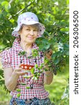 senior female in garden... | Shutterstock . vector #206306500