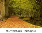 A Path Through The Forest In...