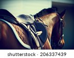Stock photo saddle with stirrups on a back of a horse 206337439
