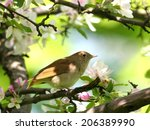 nightingale perched in... | Shutterstock . vector #206389990