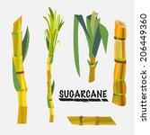sugarcane   vector illustration | Shutterstock .eps vector #206449360