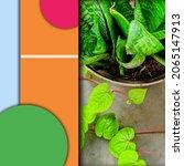 plant poster for your thumbnail ...   Shutterstock .eps vector #2065147913