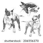 Set Of Hand Drawn Dogs. Bull...