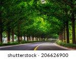 damyang metasequoia road in... | Shutterstock . vector #206626900