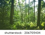 summer vegetation in  hallerbos ... | Shutterstock . vector #206705434