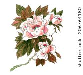 watercolor flowers in a... | Shutterstock . vector #206764180