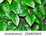 green leaf | Shutterstock . vector #206802844
