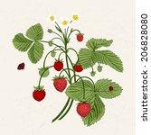Bush Of Wild Strawberries....