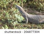 lizard  corbett national park ... | Shutterstock . vector #206877304