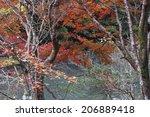 autumn leaves in takao kyoto | Shutterstock . vector #206889418