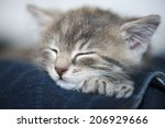 Stock photo kitten on owner 206929666