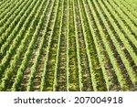 vineyard | Shutterstock . vector #207004918