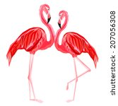 couple  of pink flamingos     Shutterstock .eps vector #207056308